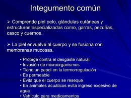 3 Integumento común - anatomiayplastinacion