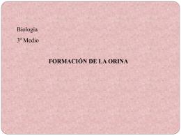 PPT Formación Orina - Colegio Santa Cecilia