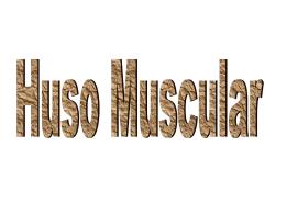 Clase 9-10 fisio
