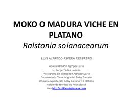 MOKO O MADURA VICHE EN PLATANO