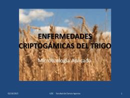 ENFERMEDADES CRIPTOGÁMICAS DEL TRIGO