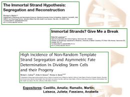Hipótesis de la hebra inmortal - Departamento de Quimica Biologica