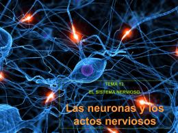 2. Las neuronas y los actos nerviosos