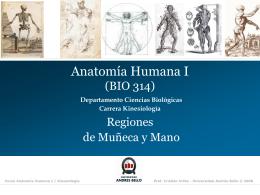 Miembro superior III- Region mano y muñeca