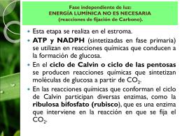 etapa_2_fotosintesis