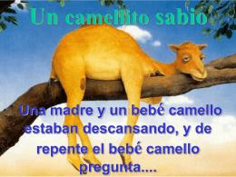 CAMELLO SABIO