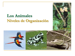 CLASE 08 - TEJIDOS ANIMALES