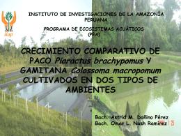 P>t - Instituto de Investigaciones de la Amazonía Peruana