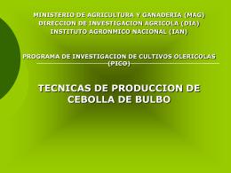 TECNICAS DE PRODUCCION DE CEBOLLA DE BULBO