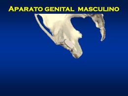 Presentación de PowerPoint - anatomia-ubb