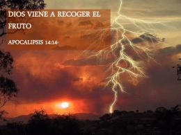 20140803 Dios viene a recoger el fruto