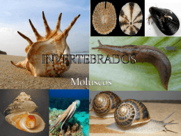 Moluscos - BioGeo y Medio Ambiente