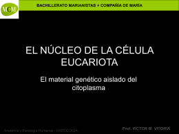 núcleo de la célula - PROFESOR JANO es Víctor M. Vitoria