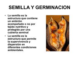 14.SEMILLA Y GERMINACION