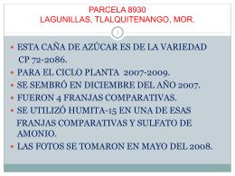 PRUEBAS DE HUMITA -15 EN CAÑA DE AZÚCAR