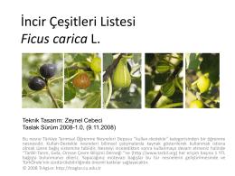 İncir Çeşitleri Ficus carica L.