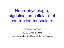 Neurophysiologie et signalisation cellulaire
