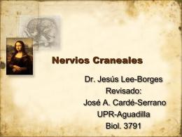 NerviosCraneales