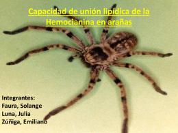 Capacidad de unión lipídica de la Hemocianina en arañas
