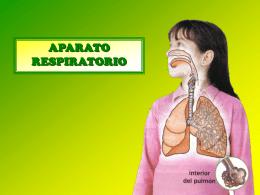 aparato-respiratorio