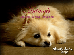 Animals - WordPress.com