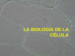 célula - MsMercado