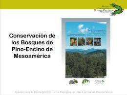 conservación de los bosques de pino-encino