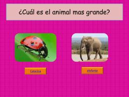 Cuál es el animal mas grande 2