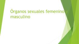 Órganos sexuales femenino y masculino