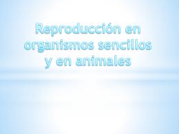 Reproducción en organismos sencillos y en animales