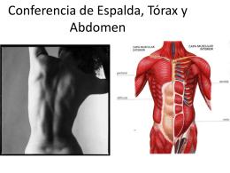 Conferencia de Espalda, Torax y Abdomen