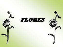 FLORES - WordPress.com