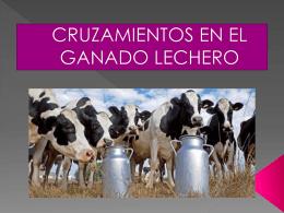 CRUZAMIENTOS EN EL GANADO LECHERO