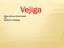 Vejiga - Anatomía y Fisiología Humana