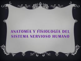 Anatomía y fisiología del sistema nervioso humano