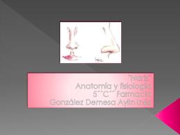 Porción interna de la nariz o cavidad nasal