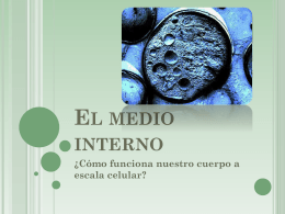 El medio interno