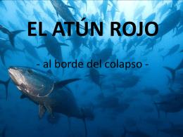 EL ATÚN ROJO - Liceo Crespi