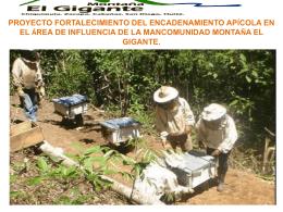 Fortalecimiento del encadenamiento apícola en el área