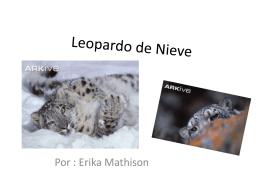 Leopardo de Nieve - Unicornio con bigote