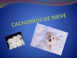 CACHORROS DE NIEVE