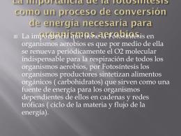 La importancia de la fotosíntesis como un proceso de conversión de