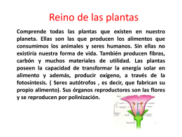 Reino Vegetal o de las plantas