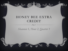 Honey Bee extra credit