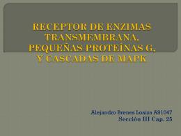 sección iii. receptor de enzimas transmembrana, pequeñas