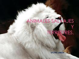 ANIMALES SALVAJES de ixchel limon 3 b
