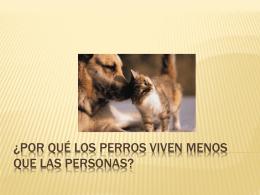 ¿Por qué los perros viven menos que las personas?