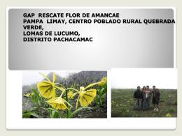 RESCATE FLOR DE AMANCAE (1)
