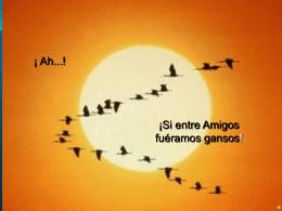 Los Gansos