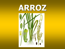 Arroz 2